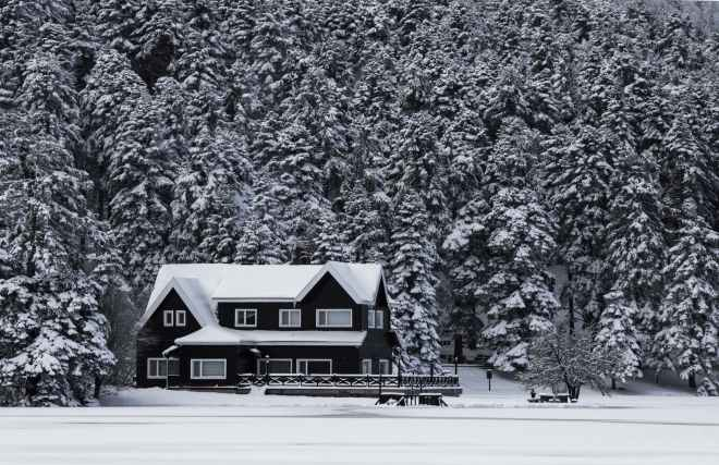 cold snow trees winter